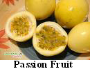 passion_fruit.jpg