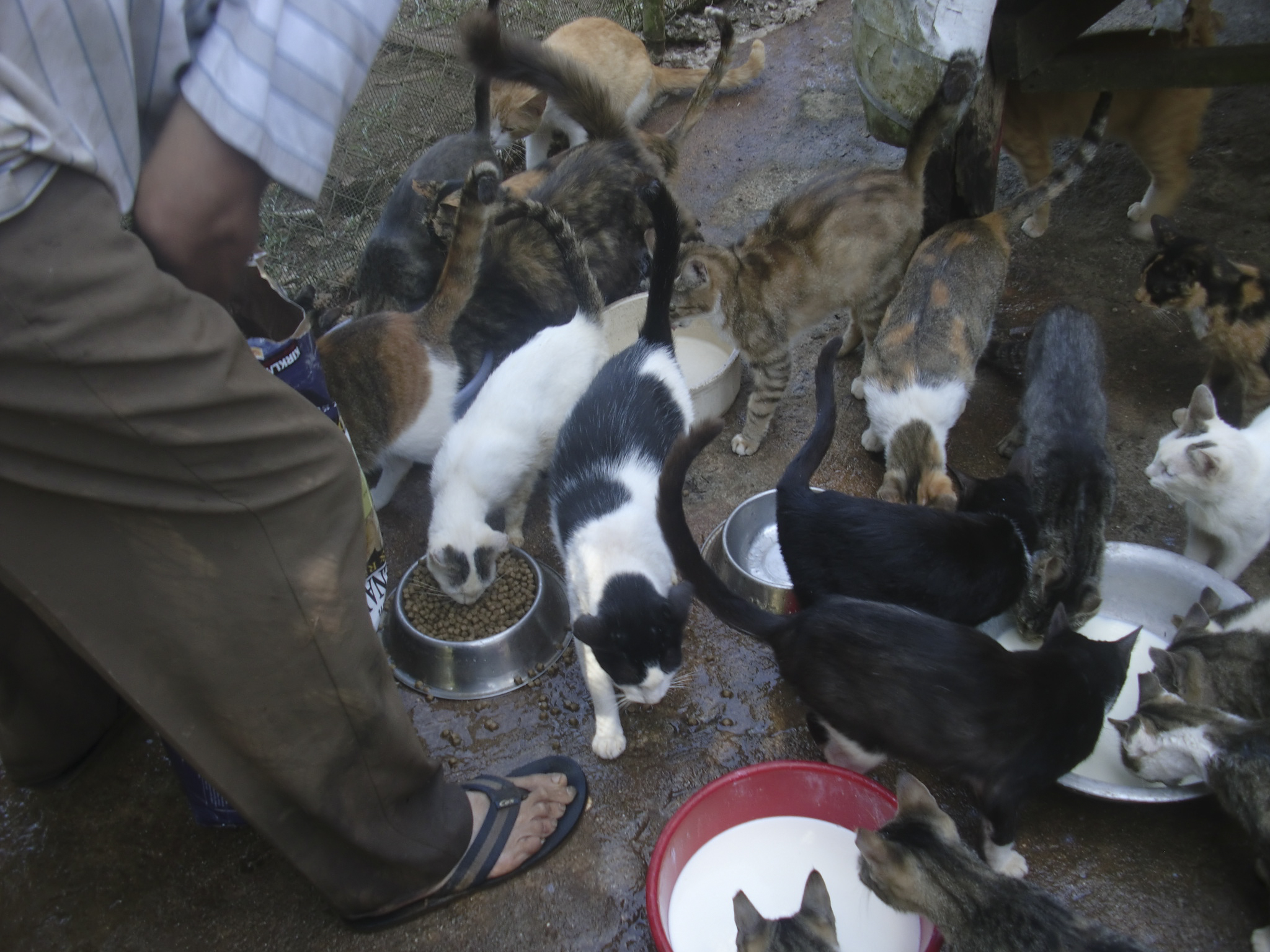 how to help animals in your community